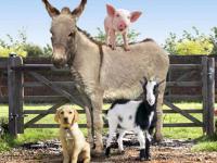 Image La Ferme du Bonheur (Big Barn Farm)